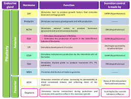Hormones And Their Functions Chart Hormones And Their Functions Table Endocrine Hormones