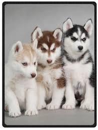 Siberian Husky Puppies Dogs Pets Queen Size Plush ... - Amazon.com