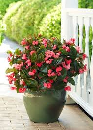 best shade plants for pots shade