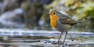 Es kommt selten vor, dass wir einen vogel zum zweiten mal als vogel des jahres ausrufen. Umfrage Des Nabu Wahl Zum Vogel Des Jahres 2021 Gestartet Mz De
