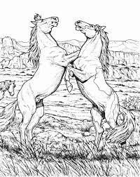 Fighting Wild Horse Animal Coloring Page Animal Coloring Pages