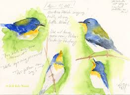 painting 151 field sketches of a northern parula