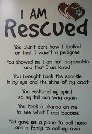 Rescue Dog Quotes Extraordinary I Am Rescued DogsBlue Heeler Pinterest Dog Animal And Fur Babies