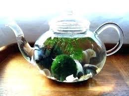 decorative glass full size of for bowls e decorating delectable australia garden decorative glass