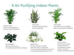 house plants pictures and names beauteous house plants names good house plants which plant do you house plants pictures and names