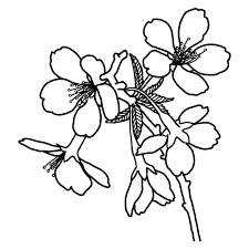 フジザクラ富士桜白黒山梨県の花都道府県の木花鳥イラスト素材