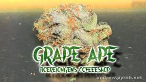 best weed cafe in amsterdam 2015