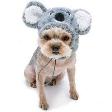 Koala Clothes Size Chart Koala Bear Hat Dog Costume