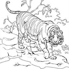 Small Picture Siberian Animal Coloring Pages Free Printable Tiger Coloring Pages