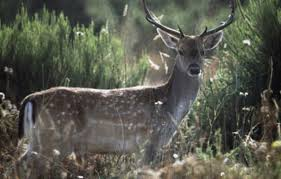 Keep Deer Away From Fruit Trees
