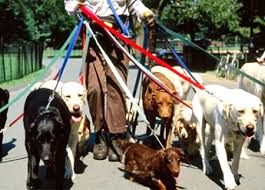 Image result for walking two dogs tangled