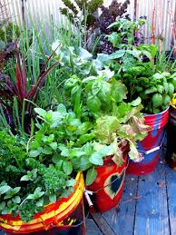 the best vegetables and herbs for your