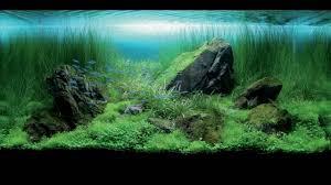 Fish Tank Fish Tanks Lessons Tes Teach