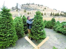 Color Your Christmas With These 10 Artificial Trees  HGTVu0027s What Kind Of Christmas Trees Are There