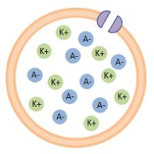 「イオン na k」の画像検索結果