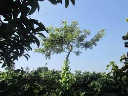 UTZ From the Vietnamese highlands, a story about coffee and sun - UTZ
