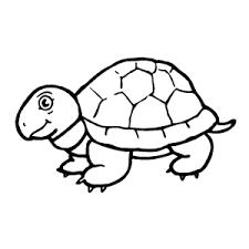 Schildpadden Kleurplaten Leuk Voor Kids