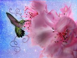 hummingbird paintings wallpaper hummingbird hd wallpapers pictures images backgrounds photos