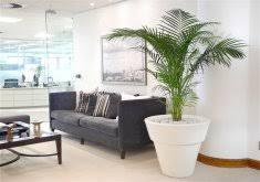 modern office plants. Superb Modern Office Plants Dubai D