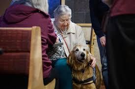 Community celebrates comfort dog Barnabas' 10th birthday - Chicago Tribune