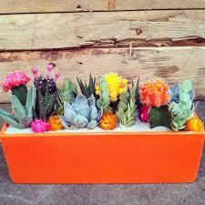 awesome indoor and outdoor cactus garden ideas no 46 design