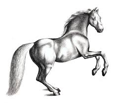horses drawings in pencil step by step. Beautiful Horses Drawing A Horse Step 4 Intended Horses Drawings In Pencil By H