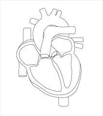 Free Blank Human Heart Diagram Download joomla 1 5 templates free download for windows 7,templates free on joomla media template