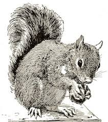 Small Picture Squirrel Drawing Free Vintage Art