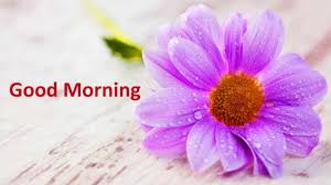 good morning flowers images free pictures wallpaper hd photos videos sayings for love