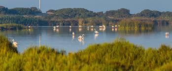 Resultado de imagen de Punta Entinas-Sabinar