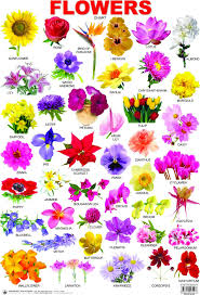 Flower Species Chart 25 Lovely Flowers Names In Telugu English Hindi Flowers Name