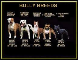 Pin By Kelly Price On Pets Bully Dog Pitbull Terrier