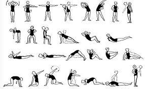 Рефераты на тему гимнастика по физкультуре работ Нормы спорта  вариант комплекса гимнастических упражнений