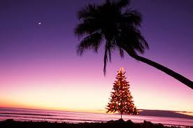Āina Mauna Christmas Tree Demonstration Project U2013 Hawaii Forest Christmas Tree Hawaii