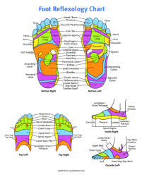 Reflexology Chart Pin By Cj Wilson On Essential Oils Hand Reflexology Foot