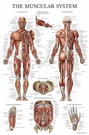Anatomy Chart Wallpapers Abstract