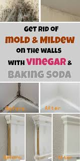 get rid of mold mildew on the walls with vinegar and baking soda  mycleaningsolutions ...