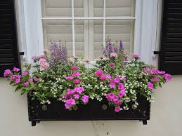 Build Window Box Flower Boxes That Thrive In The Sun Window Box Flowers Window