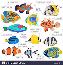 Clown Fish Identification Chart Freshwater Aquarium Fish Breeds Icon Set Flat Style Isolated