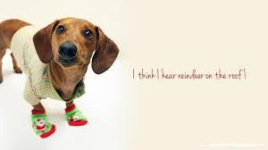 Cute Dog Christmas Desktop Wallpaper ...