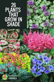 25 Gorgeous Shade-Tolerant Plants That Will Bring Your Shaded Garden Areas  to Life