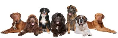 lots of dogs together. Exellent Lots Dog Picking2 In Lots Of Dogs Together S