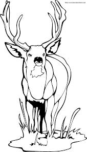 Dessin Imprimer Cerf Volant