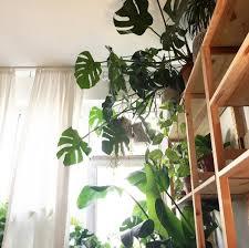Zimmerpflanze Bilder Ideen Couch