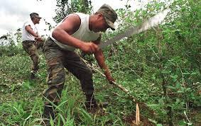 Resultado de imagen para peru cultivos de coca