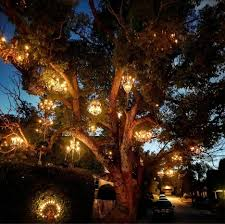 drive thru tree park pineapple chandelier tree drive through california where is the redwood tree you drive through