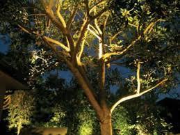 landscape lighting trees. Modren Trees Moonlighting Lawnshadows For Landscape Lighting Trees