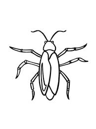 Kakkerlak Kleurplaat Gratis Kleurplaten Printen