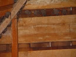 allstate animal control bat colony in attic