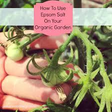 epsom salt for gardening. How To Use Epsom Salt On Your Organic Garden | Gates Interior Design And Feng Shui - Amanda For Gardening